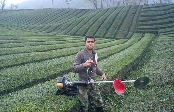 تمدید مهلت پرداخت تسهیلات به زراعی و بهسازی به چایکاران شمالی